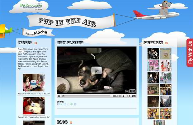 wordpress video blog design - Petrelocation.com