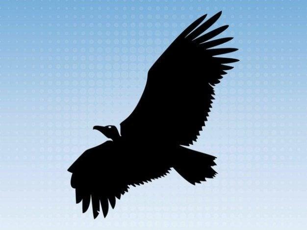 Big eagle flying animal silhouette