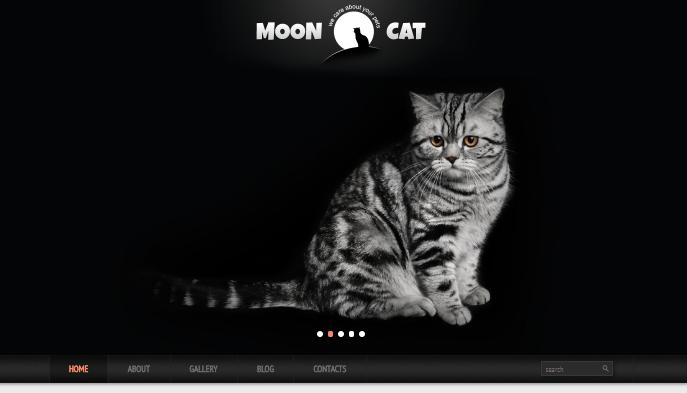 Conceptual Cat