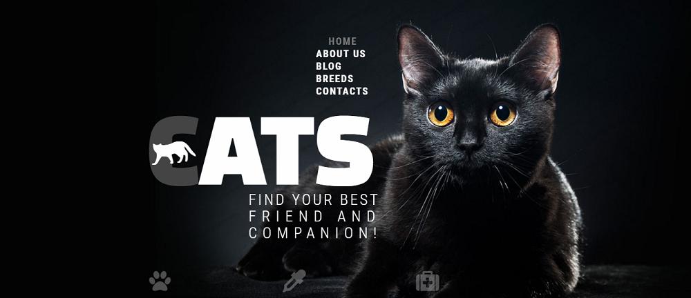 Cats Club Website Template