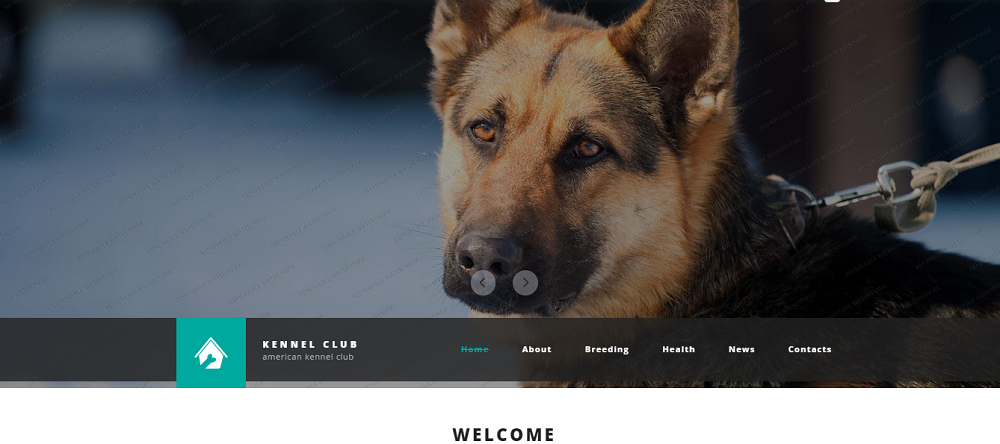 Kennel Club Website Template