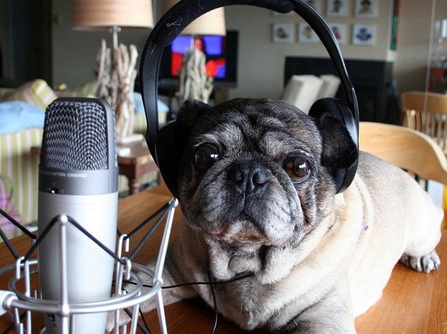 Dog-Podcaster