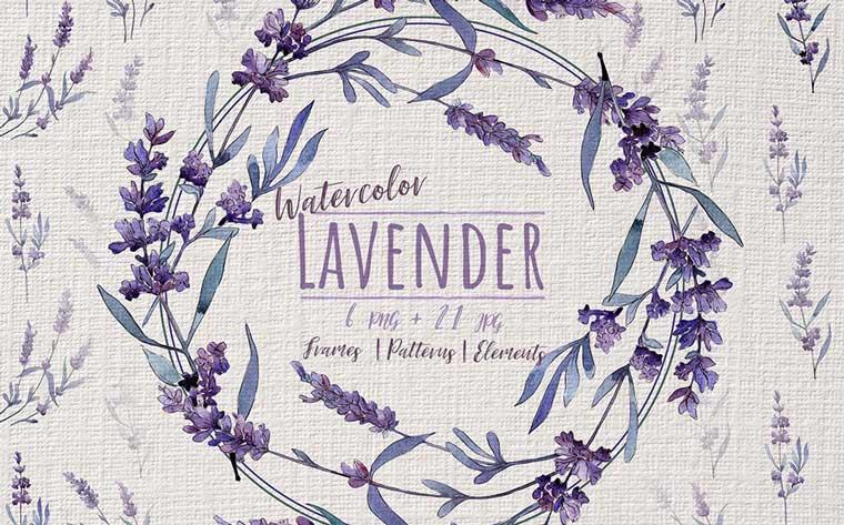 Wonderful Violet Lavender PNG Watercolor Set Illustration.