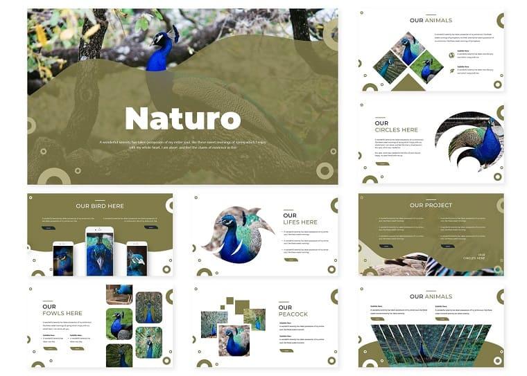 Naturo | PowerPoint Template