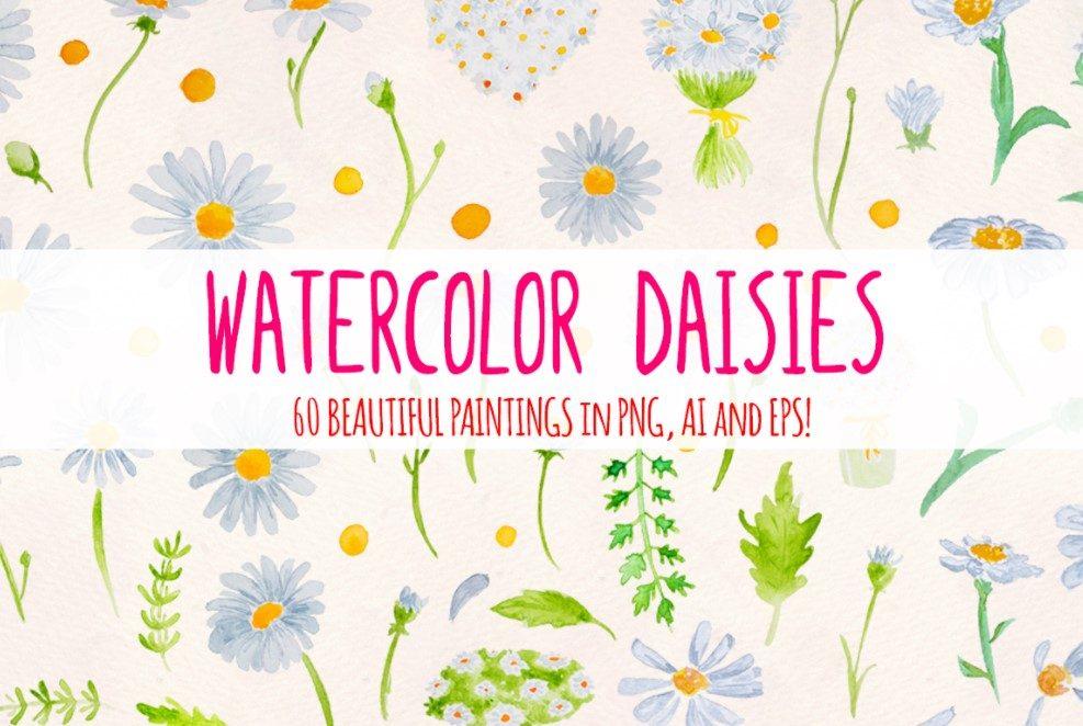 60 watercolor daisy clipart