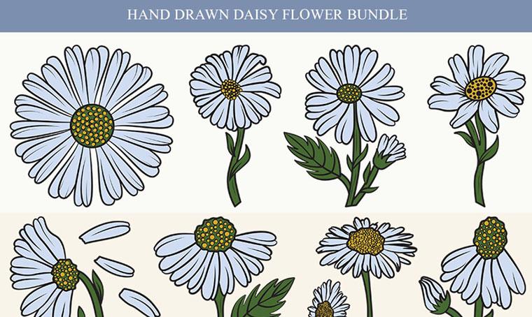 Daisy Flower Women's Day Clipart