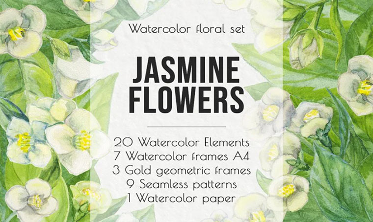 Jasmine Flowers And Leaves Women's Day Clipart