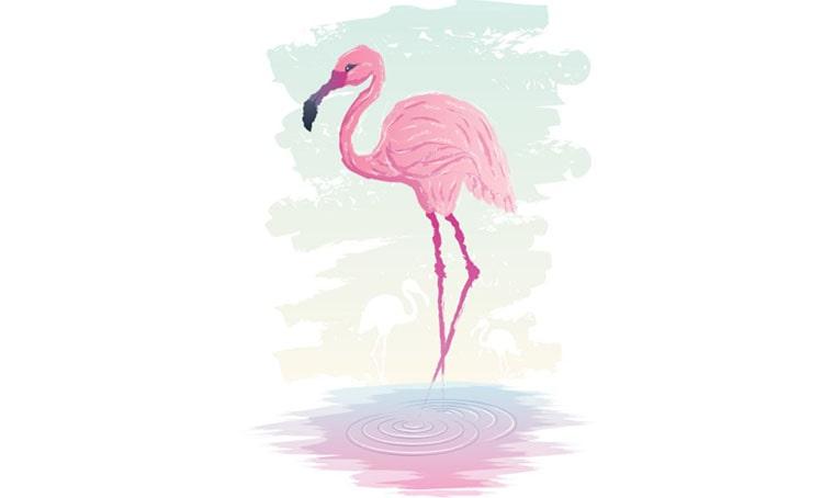 Flamingo Watercolor Vector